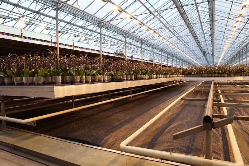 Basic floor in greenhouse