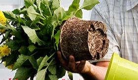 Hoe zorg ik voor een vitale plant met een goed wortelgestel?